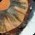 Blue stain fungus (Grosmannia clavigera) on wood
