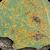 Populus tremula, Melampsora larici-populina uredosori backsite leave