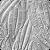 Gibberella zeae picture