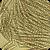 Ascospores of Lepthosphaeria maculans
