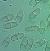 Picture of Nectria haematococca